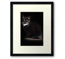Tuxedo Cat Framed Print