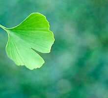 Gingko Biloba by Melissa Thorburn