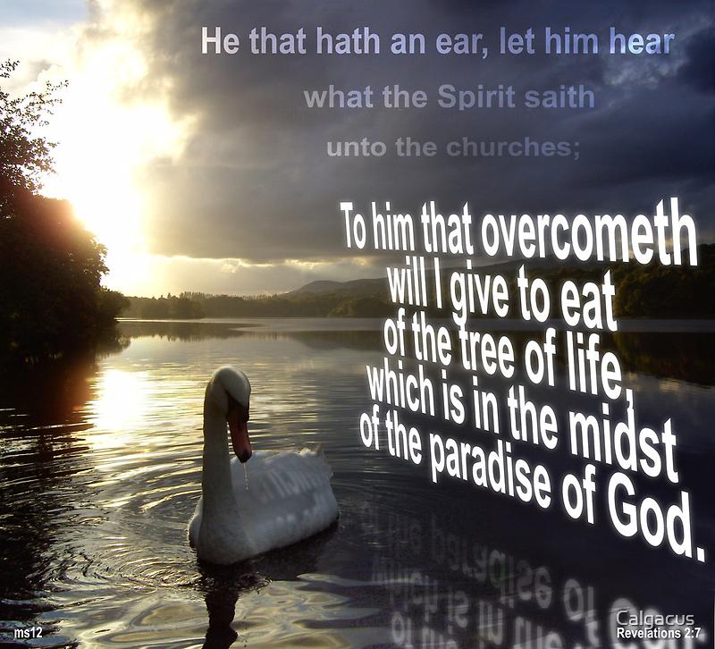 Hear what the Spirit saith  by Calgacus