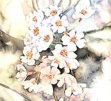 Cherry blossoms by Anna  Yudina