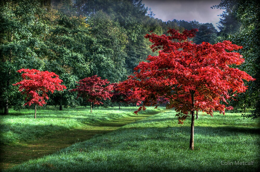 Autumn Avenue by Colin Metcalf