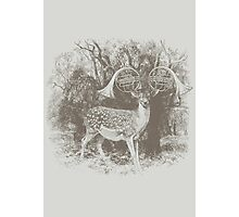 Great Horns Photographic Print