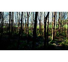 Ballymaloe's Grove Photographic Print