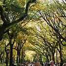 Central Park Fall Colors, New York City,  by lenspiro