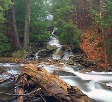 Gushing Tributary Swelling Kitchen Creek by Gene Walls