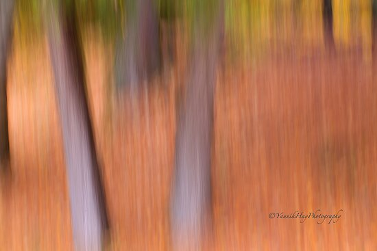 Trees- 19 - Impressions by Yannik Hay