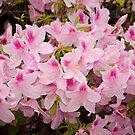 Flowers by Chuck Coniglio