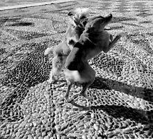 1988 - dog dance by moyo