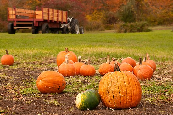 The Picked Over Punkin Patch by TeresaB
