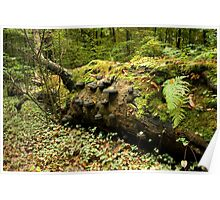 Overgrown with mosses and fungi Poster