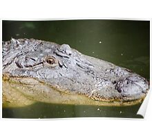 This Gator Likes You Poster