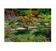 BUTCHART Gardens in Spring  Art Print