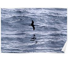 Shearwater Poster