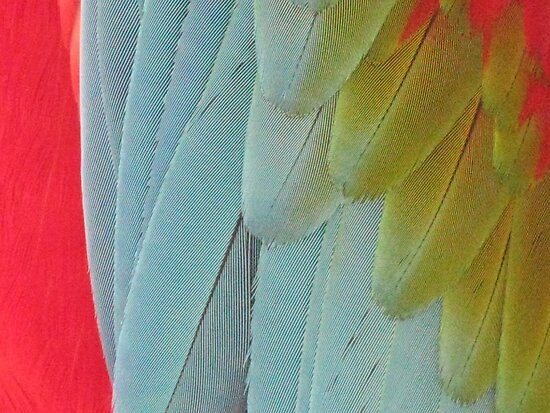 macaw  by wendy lamb
