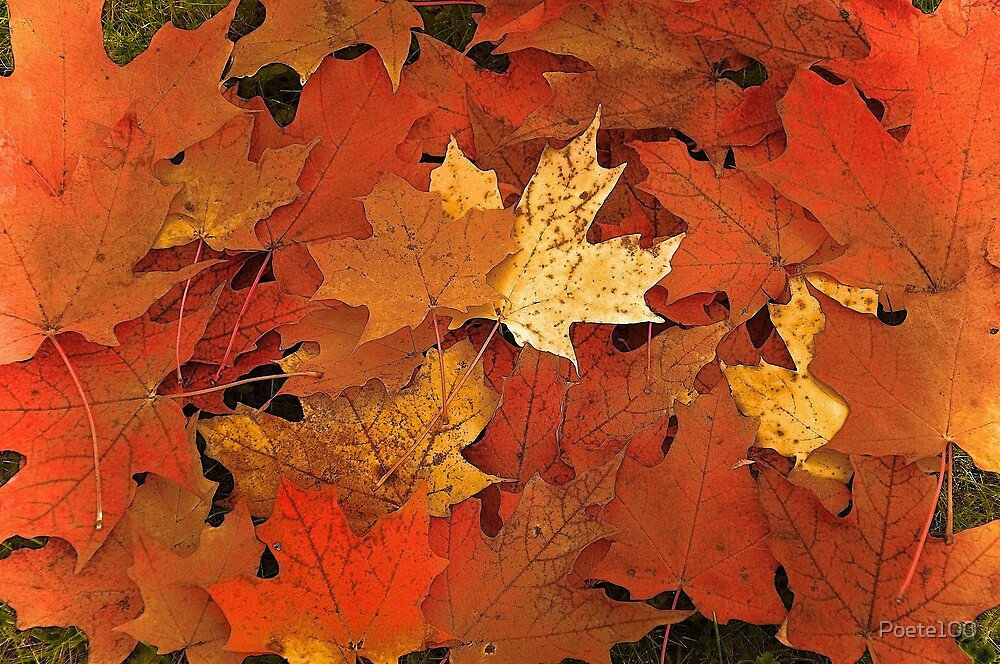 Autumn leaves by Poete100