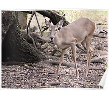 Doe in Nature Poster