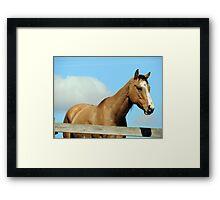 Tan Horse Blue Sky Framed Print