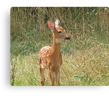 I'm Fawn-d of You Canvas Print