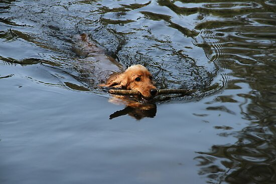 She Is Like An Otter by aussiebushstick