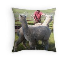 'YOU WATCH OVER THERE & I'LL WATCH OVER HERE'! Alpaccas on the job. Throw Pillow