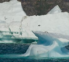 Arctic by Mark Prior
