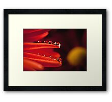 Dew drops Framed Print