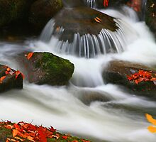 CASCADE AND LEAVES by Chuck Wickham
