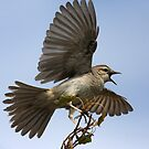 Big Scary Bird by Phillip Weyers
