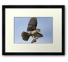 Big Scary Bird Framed Print
