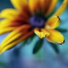Yellow and Blue by tanjica