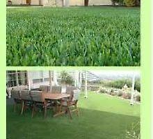 Synthetic grass las vegas by lasvegasgrass