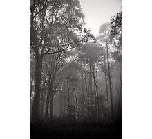 Trees in the mist -  Marysville Photographic Print