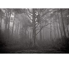 Gather in the mist - Marysville Photographic Print