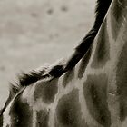 Giraffe in Black by Matt Hill