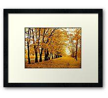 Polish autumn Framed Print