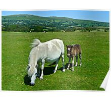 Dartmoor Pony and Foal Poster