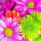 Burst Of Colorful Spring Flowers by daphsam