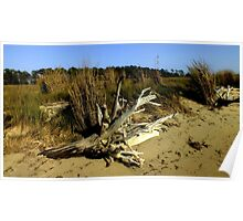 Driftwood on the Edge of the Marsh Poster