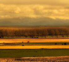 ocres y amarillos by Mindor