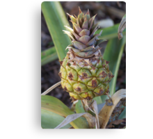 Baby Pineapple Canvas Print
