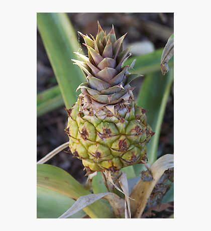 Baby Pineapple Photographic Print