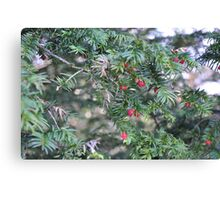 Yew'll Have A Merry Christmas Canvas Print