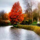 Autumn Tree in Tunbridge Wells  by larry flewers