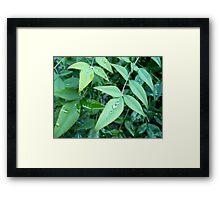 Rain on Leaves Framed Print