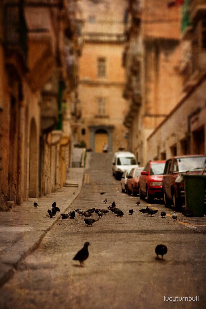 Maltese street pigeons by lucyturnbull