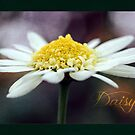 Textured Daisy by Astrid Ewing Photography