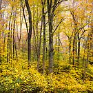 Autumn Western NC Fall Foliage - Forest for the Trees by Dave Allen