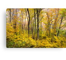 Autumn Western NC Fall Foliage - Forest for the Trees Canvas Print
