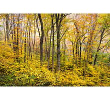 Autumn Western NC Fall Foliage - Forest for the Trees Photographic Print