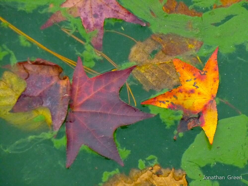 Dancing Leaves by Jonathan  Green
